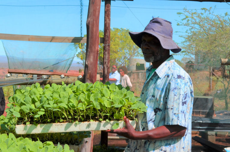 Climate Resilience is integral in Siyazisiza's Small-holder Enterprise Development Initiative